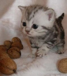 It's a teeny kitten!!!