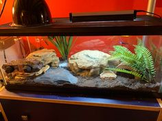 I upgraded my leopard gecko's tank to something more naturalistic! I'm also using UVB and a deep heat projector. I already caught him basking! Leopard Gecko Setup, Leopard Gecko Cage, Leopard Gecko Terrarium, Leopard Gecko Habitat, Leopard Geckos, Reptile Room, Reptile Cage, Reptile Enclosure, Reptile House