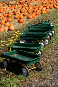 This reminds me of living in Connecticut.... all the pumpkin patches had wagons and didn't feel like tourist attractions, just farms.  I loved it!