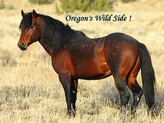 Oregon's Wild Side - by Maggie Rothauge.  Without her passion for the horses, where would we be?  I credit her for introducing me to the awesome beauty of Oregon's wild horses and the stunning raw beauty of Oregon.  I wish I lived there!