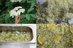 Dieta cu flori de soc: slabesti 7 kg si elimini celulita si toxinele din organism. - Pentru Ea Palak Paneer, Metabolism, Avocado, Cancer, Ethnic Recipes, Diet, Green, Syrup, Plant