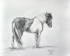Flauta - Icelandic Horse: Na d'Onofrio 16/3/16 - Pencil and graphite wash