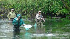 Open de Pesca Río Xallas. The fishing competition in the Xallas River. La compétition de pêche de la Riviére du Xallas.