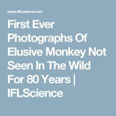 First Ever Photographs Of Elusive Monkey Not Seen In The Wild For 80 Years | IFLScience