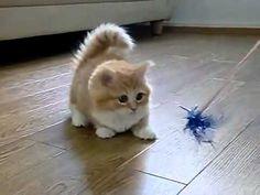 Fluffy Kitten Is Confused  www.kittinspiration.com