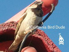 California Bird Dude by Farrell Hamann