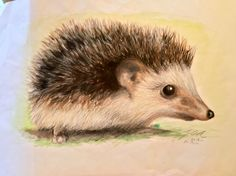 Hedgehog, painted by me with watercolours and drawn with watercolour pencils :)