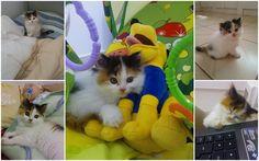 Bebês e animais de estimação