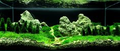 Planted Tank Alaszka by kuchi - Aquascape Awards