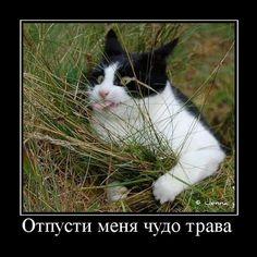 8900_640.jpg (614×616)