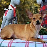 Available Pets At Burlington County Animal Alliance In Willingboro New Jersey Pet Adoption Kitten Adoption Pet Adoption Center