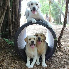 There's a lab at the end of the tunnel...