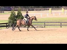 Thankful is a 6 yr old imported Oldenburg approx. 16.2 gelding by Levison. Started showing locally in 2016, winning everytime out, in 2017  he began showing successfully in the 3ft Greens at A shows, easily moving up to the 3'3. This summer he placed 9th in his first derby with an excellent handy round. Recently he has been shown in Children's Hunters, winning Champion at HITS Saugerties. He is tolerant, straight forward and possesses tons of talent and potential for the 3'6. Than...