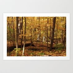 Maple Forest Art Print by Lyle58 - $13.99