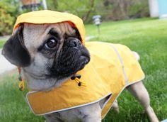 canine rain gear