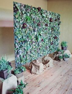 Succulent photobooth or wedding backdrop