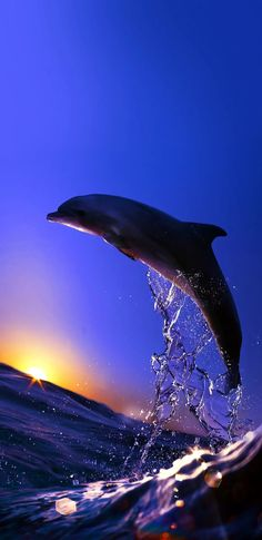 Dolphin Images, Dolphin Photos, Dolphin Art, Cute Wallpaper Backgrounds, Pretty Wallpapers, Animal Wallpaper, Wallpaper Awesome, Baby Animals Pictures, Cute Animal Pictures
