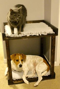 How to build DIY pet bunk beds - Pet Bed Love Bunks - Charleston Crafted