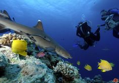 Coral Sea Australia | Australia urged to save Coral Sea animals Pictures & Photos