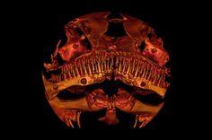 Alien-Looking Catfish Stumps Taxonomists