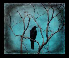 Metallic Print, Vignetted, Raven Art Photograph, Fade-Resistant Photograph, Turquoise Blue  -  Aqua Zen on Etsy, $25.00