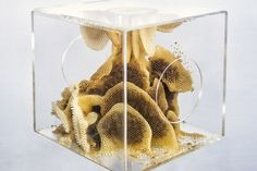 REN RI, investigating the relationship between bees and humanity | CLOT Magazine Kitchen Plants, Slime Mould, Bee Honeycomb, Animal Body Parts, Systems Biology, Anatomy Study, Life Form, Bee Keeping, Artist At Work