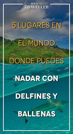 ¿Te gusta disfrutar de la compañía de #animales al #viajar? ¿Quieres vivir una de las #mejores #experiencias de tu vida? Descubre estos lugares donde puedes nadar con #delfines y #ballenas.