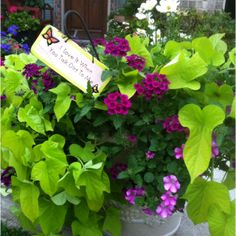 Great combo...sweet potato vine is my all-time favorite container plant.