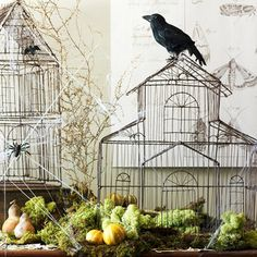 Spooky Cages -  Stage birdcages as an eerie display guarded by a beady-eye blackbird. Set the chilling scene with dried moss, gourds, twigs, and fake spiderwebs, bugs, and bats