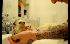 They love to dance.   20 Enchanting Facts About Hedgehogs