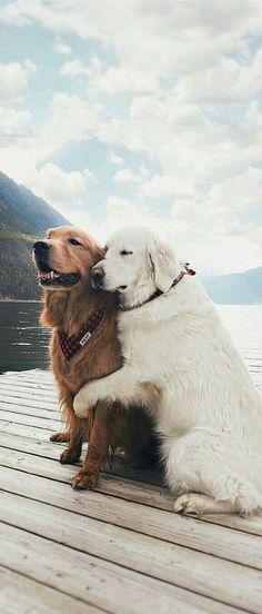 Champion Dogs: German Shepherd: Golden Retriever: Labrador Retriever: Beagle: Siberian Husky: Pit Bull Terrier: Chihuahuas: Pomeranian: Dog Tips and Ideas: Cute Baby Animals, Animals And Pets, Funny Animals, Funny Dogs, Zoo Animals, Cute Dogs And Puppies, I Love Dogs, Doggies, Nice Dogs