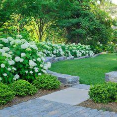 hydrangeas and boxwood shrubs