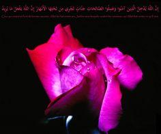Lorsque la femme musulmane entre dans la mosquée, il lui est préférable de faire deux inclinaisons avec l'intention de saluer la mosquée. Cette prière ne doit pas avoir lieu dans les horaires où la prière est interdite, lorsque la prière obligatoire est...
