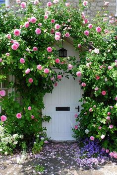 Pink climbing roses surround a cottage door. So pretty!