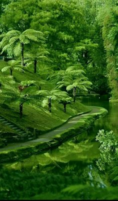 Science Discover New Green Nature Trees Beautiful 33 Ideas Nature Pictures Beautiful Pictures Beautiful Places Beautiful Scenery Beautiful Landscapes Beautiful Gardens Beautiful Landscape Photography Green Nature Green Trees Beautiful World, Beautiful Gardens, Beautiful Places, Beautiful Pictures, Beautiful Scenery, Landscape Photography, Nature Photography, Places To Travel, Places To Visit