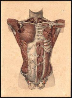 Traité complet de l'Anatomie de l'Homme.Vols. I- VIII, (Second edition, Paris, 1867–1871 https://pinterest.com/pin/287386019941966857/). Author: BOURGERY, Jean-Baptiste (1797-1849 https://pinterest.com/pin/287386019948321810). Artist: Nicolas Henri Jacob (1782-1871).