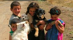 Petition · Help to Save Animals in Armenia! · Change.org