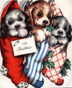 Vintage Card, look at the cute puppies in the stockings.  I wouldn't recommend this with real puppies, but this is cute on a card.