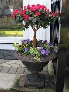 Spring container design: azalea trees