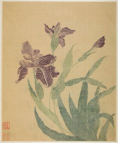 Silk painting by Ma Yuanyu (China, from an album of flowers, birds and fish.Image and text courtesy LACMA Chinese Painting, Chinese Art, Chinese Brush, Irises, Christian Marclay, Silk Art, Japanese Artists, Ink Painting, Art Of Living