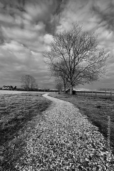 Some days inspiration finds you when you least expect it. I turned around while walking and saw this. #blackandwhite #blackandwhitephotography #landscape #landscapephoto #monochrome #dorset #landscapephotography #photography #photooftheday #inspiration Landscape Photos, Landscape Photography, Black And White Photography, Monochrome, Comedy, Creativity, Walking, Country Roads, Adventure
