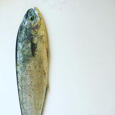 Freshly caught dinner. Лампуки бурубуки #malta #freshfish #lampuki #mahimahi #onmyplate #vscofood #islandlife @chris_briffa is it true that it was the only lampuka? :)