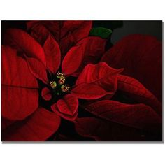Trademark Fine Art Poinsettia Canvas Wall Art by Lois Bryan, Size: 18 x 24, Multicolor