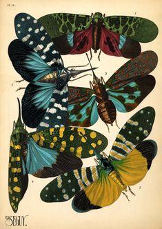 Eugene Alain (E.A.) Seguy Insectes. Plate 16