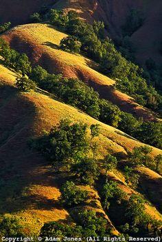 Oak trees on rolling hills of Sonoma Valley, California. I Miss the golden hills of California so much. Oklahoma, Nebraska, Wyoming, Idaho, Arkansas, Maryland, Alaska, Arizona, California Dreamin'