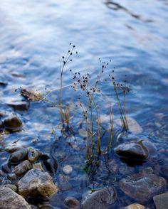 Loch side in Scotland!! #Scotland #loch #canon #water #plants