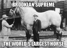 The Size Of This Horse Is Scary