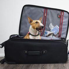 #actijoy #travelwithdog #cuteanimals #dog #tracker #dogtracker