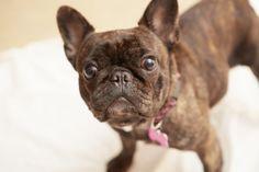 Onyx French Bulldog Wag and Ramble Dog Soap