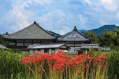 明日香の秋の定番。 飛鳥寺「曼珠沙華」 #奈良が好き  #飛鳥寺 #秋やね #明日香村 #写真好きな人と繋がりたい  #写真撮ってる人と繋がりたい  #ファインダー越しの私の世界